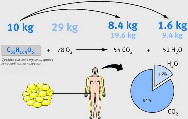 Расщеплённый жир выходит из организма естественным образом