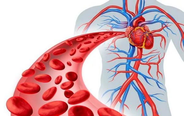 Улучшение кровообращения – лишь один из результатов