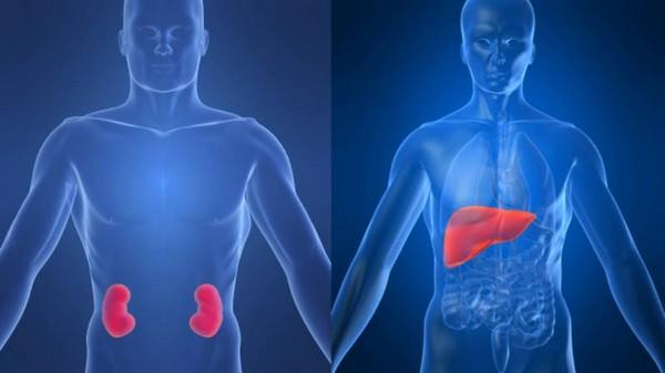 При болезнях почек и печени процедуры противопоказана