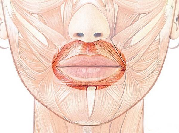 Круговая мышца рта