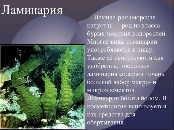 Из водорослей чаще всего берут ламинарию