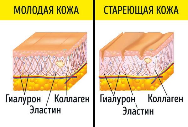 Со временем в организме становится меньше коллагена, эластина и гиалуроновой кислоты