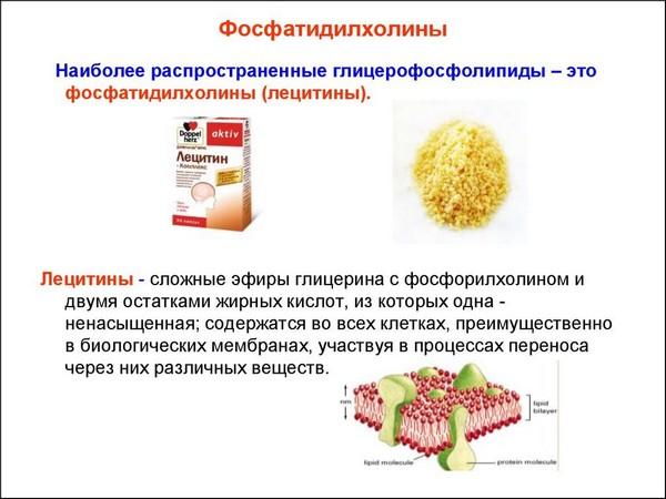 Фосфатидилхолин необходим для нормальной работы организма