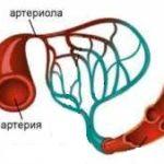 Артериолы