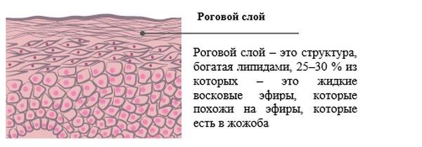 Салициловая кислота смягчает верхний слой кожи
