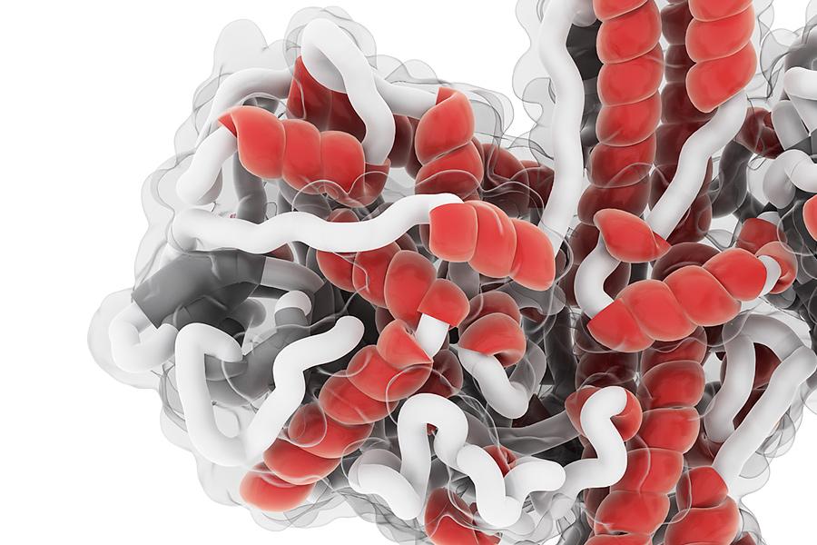 Структура молекулы ботулотоксина